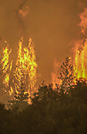 August 21, 2001 Coulterville, California  -- Creek Fire –  Hot spot blows up on Cuneo Road. The Creek Fire burned 11,500 acres between Highway 49 and Priest-Coulterville Road a few miles north of Coulterville, California.