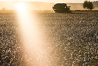 TURKEY, Kesik, near Menemen, company Genel Pamuk, harvest of conventional cotton with John Deere basket cotton picker / TUERKEI, Kesik, bei Menemen, konventioneller Baumwollanbau, Firma Genel Pamuk, nach Verspruehen eines Entlaubungsmittel wird die Baumwolle maschinell mit einer John Deere Pflueckmaschine geerntet