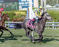 HALLANDALE BEACH, FL - JAN 13: Dream Dancing #8 with Irad Ortiz, Jr. in the irons finishes second in the $150,000 Marshua's River Stakes for trainer Mark E. Casse at Gulfstream Park on January 13, 2018 in Hallandale Beach, Florida. (Photo by Bob Aaron/Eclipse Sportswire/Getty Images)