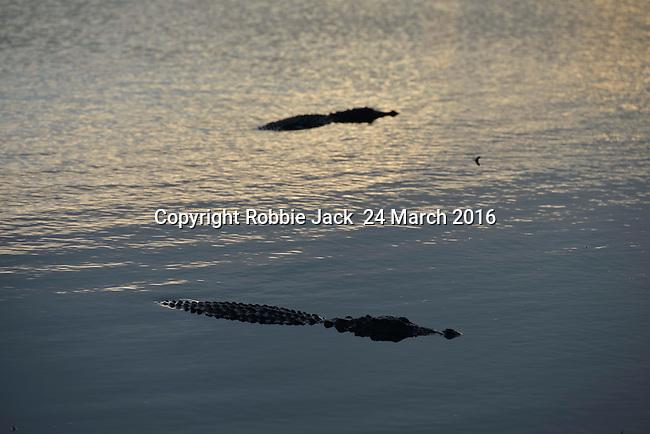Yala National Park Sri Lanka<br /> Crocodile