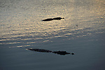 Yala National Park Sri Lanka<br /> Crocodile