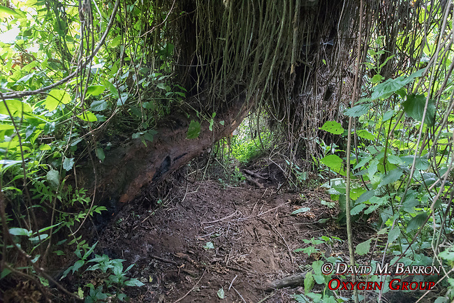 Gorilla Trecking Trail