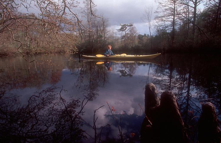 Sea Kayaker, Maryland, Nassawango Creek, Nature Conservancy Preserve, Eastern Shore of Maryland, Chesapeake Bay, Atlantic coast, USA, Cypress knees, .