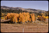 Fall color - Chama<br /> D&amp;RGW  Chama, NM