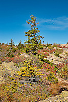Cadillac Mountain landscape, Acadia National Park, Maine, USA