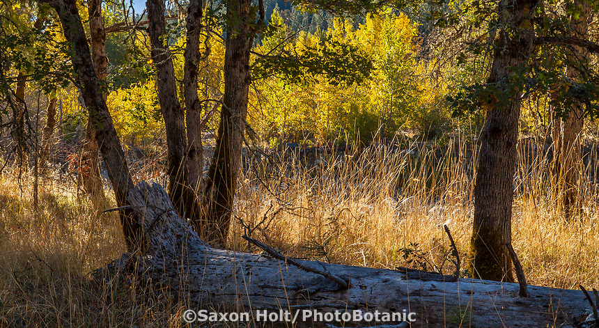 Downed tree trunk as seating to observe autumn meadow in California; Castle Crags State Park, Shasta-Trinity National Forest
