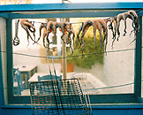 GREECE, Patmos, Chora, Dodecanese Island, small octopus hang to dry at a small restaurant in the town of Chora