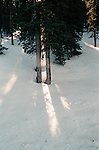 Winter scene with tree and snow with sunlight