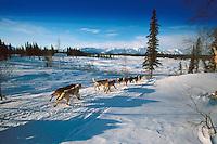 D Sawatzky Mushing on Trail to Finger Lake Iditarod 99 AK