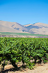 Views of vineyards along Foxen Canyon Road in California