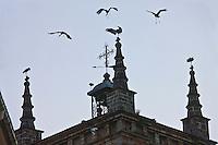 Europe/Espagne/Pays Basque/Guipuscoa/Goierri/Segura: Clocher de l Église de Notre Dame de l'Assomption et cigognes