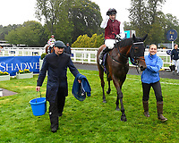 Winner of The British Stallion Studs EBF Upavon Fillies' Stakes Fanny Logan ridden by Robert Havlin and trained by John Gosden is led into the Winner's enclosure during Horse Racing at Salisbury Racecourse on 14th August 2019