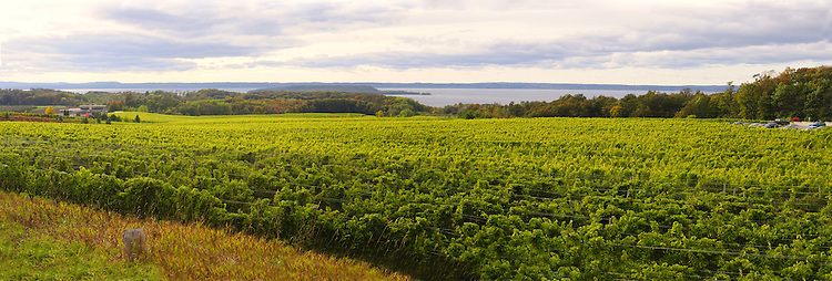 Looking West from M-37 across the vineyards of Chateau Grand Traverse to the West Arm of Grand Traverse Bay and Marion Island (also called Power Island) while heading south on the Old Mission Peninsula, October 2009.  (Photo by Dan Irving, www.irvingimage.com)