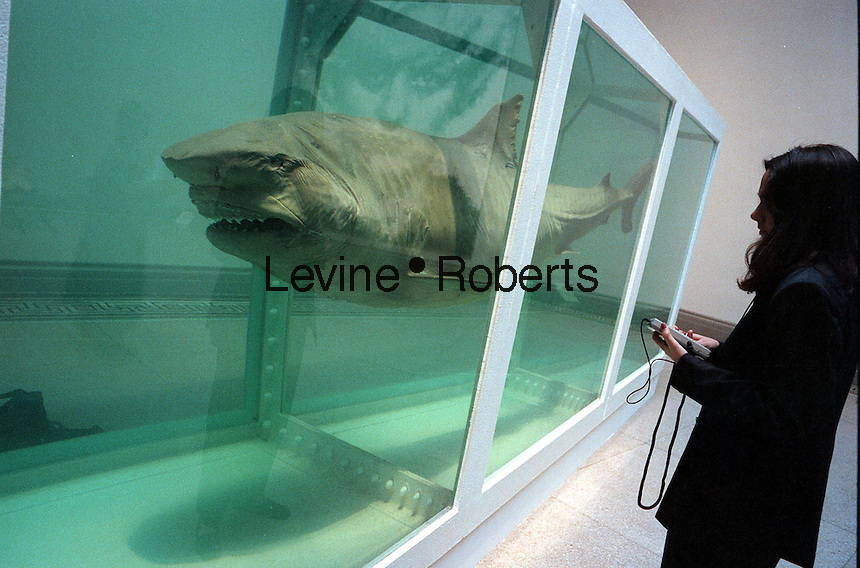 "A visitor to the Brooklyn Museum Sensation show on September 30, 1999 views ""The Physical Impossibility of Death in the Mind of Someone Living"" by the artist Damien Hirst. The sculpture consistes of a Tiger Shark in a tank in formaldehyde. ( Richard B. Levine)"