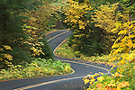 Auferheide Memorial Drive, part of the West Cascades National Scenic Byway, with Bigleaf Maple and Vine Maple trees in Fall color; Willamette National Forest, Cascade Mountains, Oregon.