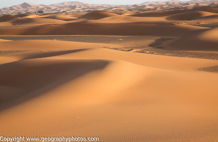 Barchan sand dunes in the Sahara desert at Merzouga, Morocco, north Africa