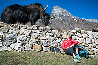 A woman sits using a solar panel while trekking in the Khumbu Valley, Nepal as a yak stands nearby