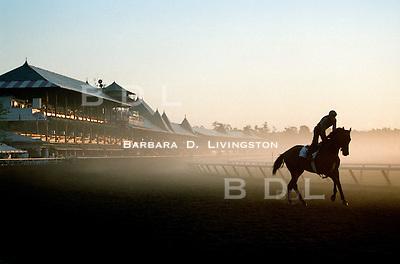 Saratoga. Saratoga Race Course, Saratoga Racetrack, beautiful horse racing, Thoroughbred racing, horse, equine, racehorse, morning mood scenic, mood, horse racing, pretty, racehorse, horse, equine, racetrack, track, saratoga