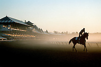 Saratoga. Saratoga Race Course, Saratoga Racetrack, beautiful horse racing, Thoroughbred racing, horse, equine, racehorse, morning mood scenic, mood, horse racing, pretty, racehorse, horse, equine, racetrack, track, saratoga