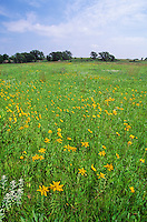 Tallgrass prairie with sunflowers and other wildflowers at Pipestone National Monument, Minnesota, AGPix_0645..