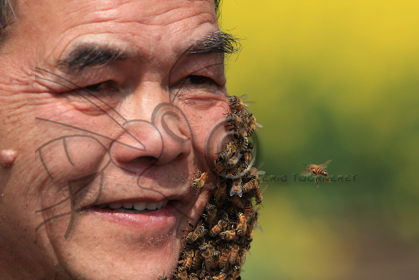 Luoping, Yunnan. Mister Yang Chuan in his apiary during a show to promote the beekeepers set up in Jinji Lin, filmed for a program on the national television's Channel CCTV 4.