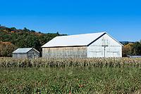 Tobacco curing barn.