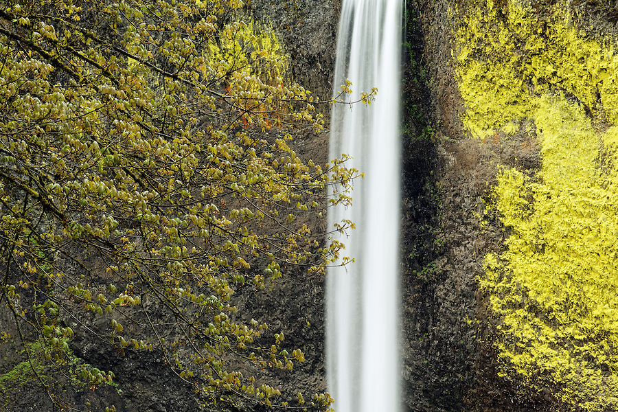 Latourell Falls, Columbia River Gorge National Scenic Area, Oregon, USA
