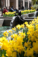 Bright yellow flowers in Rockefeller Center, Manhattan