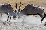6. ETOSHA NATIONAL PARK, Namibia