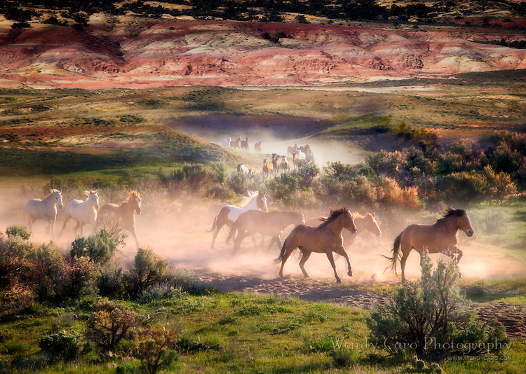 Herd of horses galloping out of the Sandwash Basin, northwest Colorado, surrounded by dust