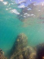 Schnorcheln am Korallenriff am Strand L'Anse Mitan bei Fort-de-France auf Martinique