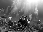 "Qixingyan ('Seven Star Rock'), Taiwan -- Group of divers shortly after their decent. I'd like to call that image ""Here comes the cavalry!"""