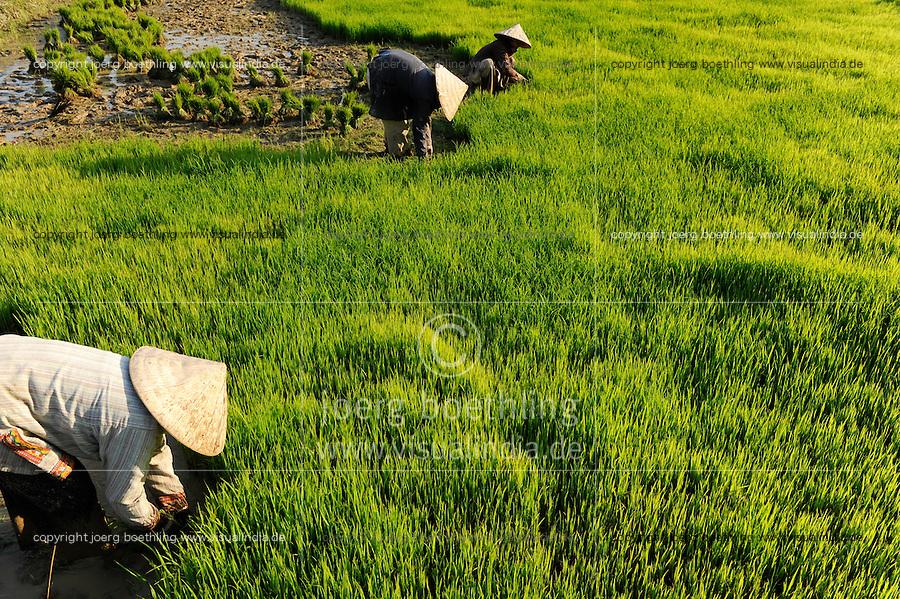 LAOS Vang Vieng , Reisfelder, Frauen pflanzen Reissetzlinge um / LAOS Vang Vieng, paddy fields, women replant rice plants