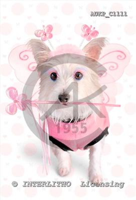 Samantha, ANIMALS,  photos,+dogs,++++,AUKPC1111,#A# Humor, lustig, divertido