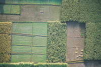 Fertile fields in the narrow irrigated strip between the River Nile and the Valley of the Kings in Egypt, viewed from a hot air balloon.