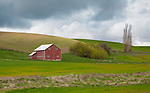 Washington, Eastern, Steptoe, Palouse Region. An old red barn under cloudy skies in spring.