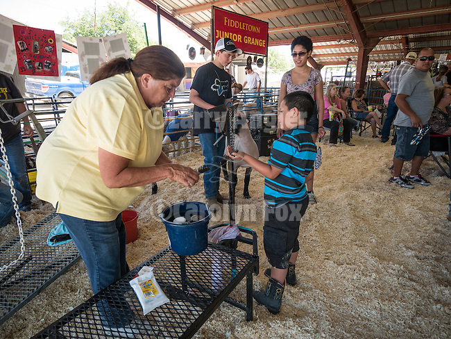 Day 2 of the Amador County Fair, Plymouth, Calif.