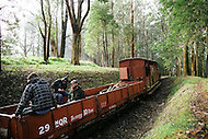Image Ref: YV141<br /> Location: Gembrook<br /> Date: 20th July 2014