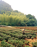 CHINA, Hangzhou, farmer works his field, Meijai Wu