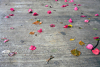 Flowers strewn across the wet ground in Tulum pueblo.