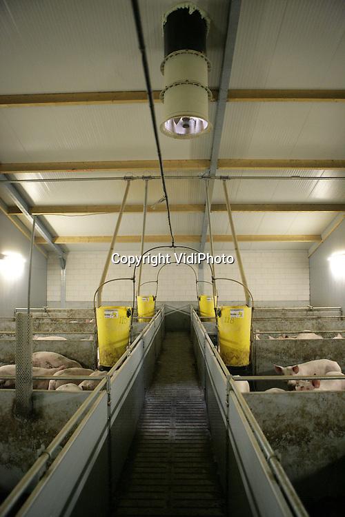 Foto: VidiPhoto..RENSWOUDE - De varkensstallen van varkenshouder Henken uit Renswoude.