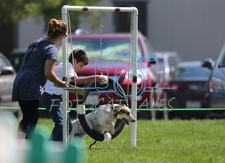 Cade Patten and his dog Eddie compete in the dog agility course at the Carson City Fair at Fuji Park on Tuesday, July 25, 2017. <br /> Photo by Cathleen Allison/Nevada Photo Source