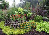 Garden-PENNSBURG-HOM-REPORTER-ANNE RAVER-A patch of contrasting foliage and color using; switch grass, ironweed, golden cata'pa, iris, barberry, Lady in Red, beets, lettuce merlot, sneezeweed (green clump), Sedum Angelina, zinnia and sweet potato vine, all grown in Nancy Ondra's garden in Pennsburg, Pa., on Wednesday July 23, 2008. Jane Therese For The New York Times