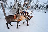 Reindeer sledding in - 25 C, with Nils-Torbjörn Nutti, owner and operator of Nutti Sámi Siida, Jukkasjärvi, Lapland, Laponia, Norrbotten county, Sweden