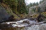 Hoh River, Hoh River Trust, The Nature Conservancy, TNC, log jam, Noland Creek, river habitat, spring, 2017 Olympic Peninsula, Washington State, Pacific Northwest, USA,