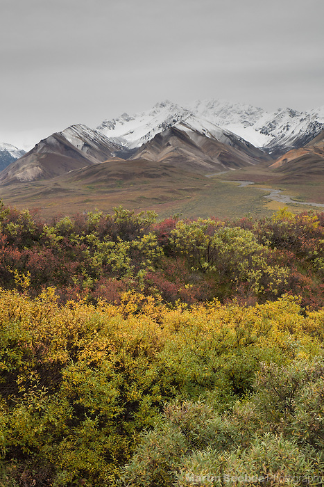 Snow-covered mountains and fall color at Polychrome Overlook, Denali National Park, Alaska