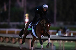 OCT 29: TVG Breeders' Cup Mile Without Parole, trained by Chad Brown gallops at Santa Anita Park in Arcadia, California on Oct 29, 2019. Evers/Eclipse Sportswire/Breeders' Cup