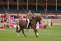 Novice Hunter Pony over 13 NE 13.2hh
