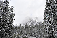 Nov. 22, 2010 -Yosemite Valley, CA, U.S. - The Yosemite Valley is covered with snow after a nighttime snow storm in Yosemite Valley November 22, 2010. According to regulars at the National Park, this is Yosemite's first snow covered Thanksgiving in nine years. (Photo by Alan Greth)