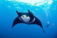 giant oceanic manta ray, Manta birostris, and scuba divers, San Benedicto Island, Revillagigedo Islands, Mexico, Pacific Ocean